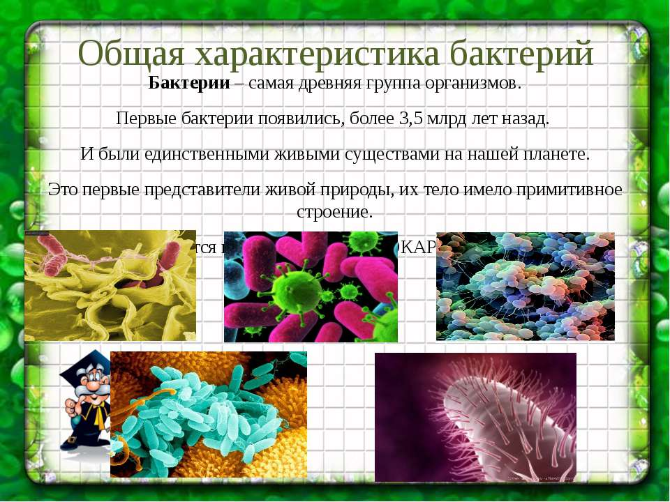 Общая характеристика бактерий Бактерии – самая древняя группа организмов. Пер...