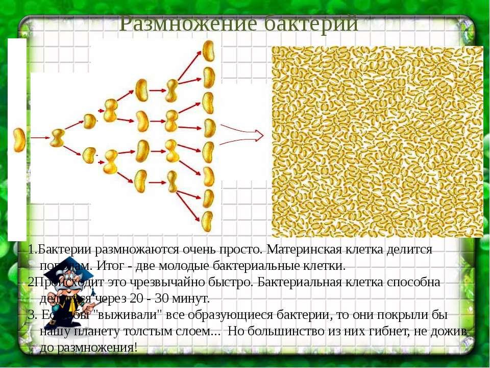Размножение бактерий 1.Бактерии размножаются очень просто. Материнская клетка...