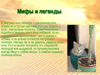 Мифы и легенды В Мексике есть легенда о кактусовом коте. Живёт он в густых за...