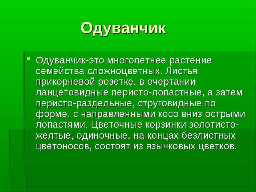 Одуванчик Одуванчик-это многолетнее растение семейства сложноцветных. Листья ...