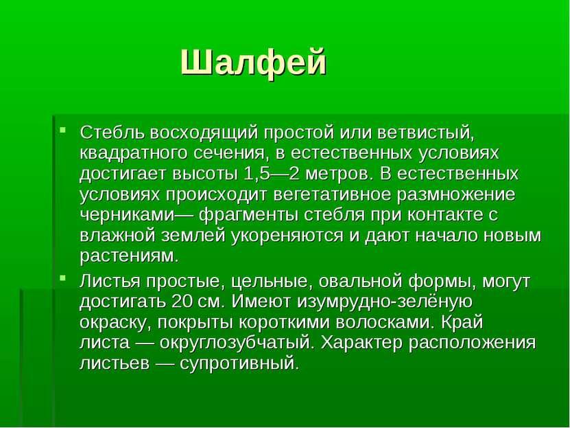 Шалфей Стебль восходящий простой или ветвистый, квадратного сечения, в естест...