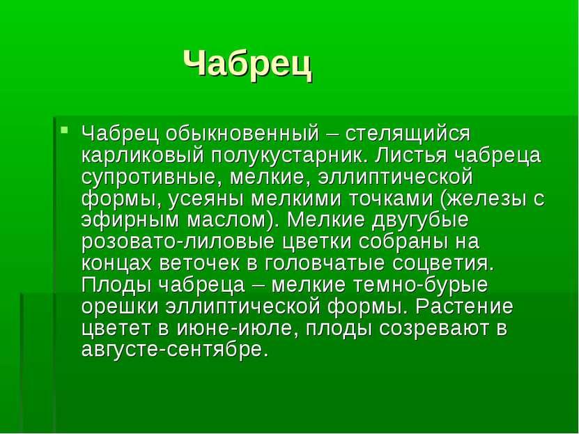 Чабрец Чабрец обыкновенный – стелящийся карликовый полукустарник. Листья чабр...