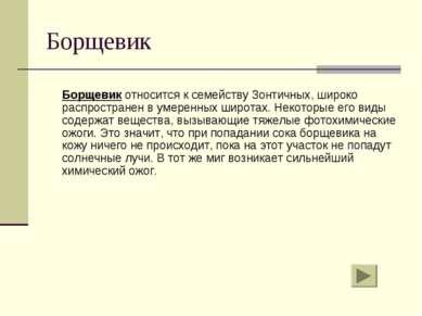 Борщевик Борщевик относится к семейству Зонтичных, широко распространен в уме...