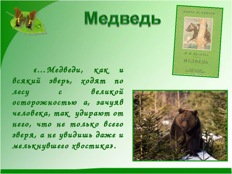 «…Медведи, как и всякий зверь, ходят по лесу с великой осторожностью а, зачуя...
