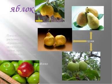 яблоко Плод яблоко имеют растения, у которых в образовании околоплодника кром...