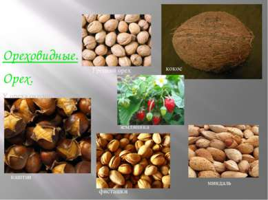 Ореховидные. Орех. У ореха околоплодник жёсткий, деревянистый. Семя лежит сво...