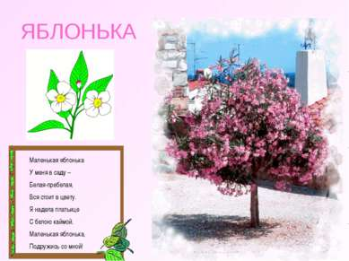 ЯБЛОНЬКА Маленькая яблонька У меня в саду – Белая-пребелая, Вся стоит в цвету...
