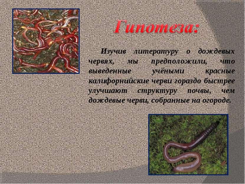 Изучив литературу о дождевых червях, мы предположили, что выведенные учёными ...