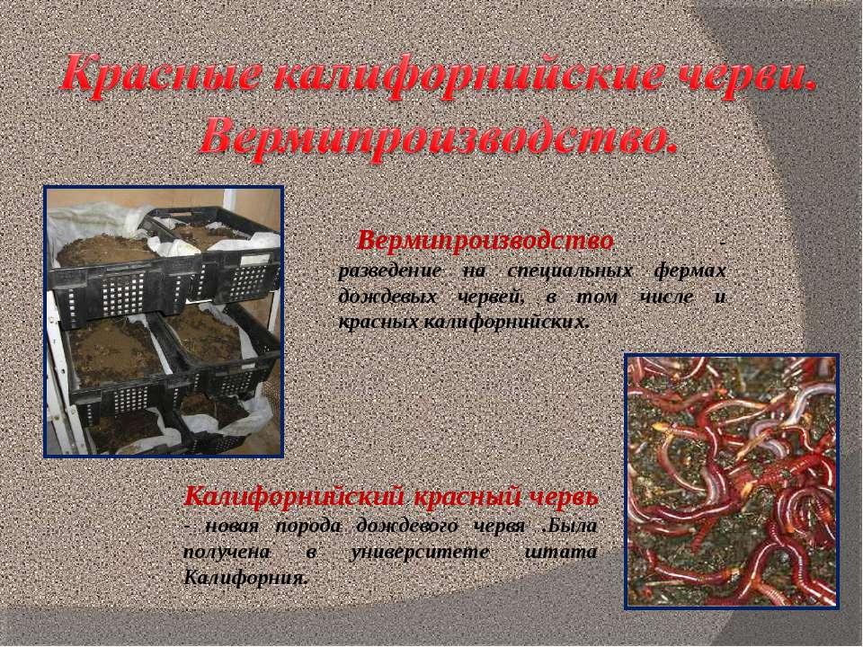 Вермипроизводство - разведение на специальных фермах дождевых червей, в том ч...
