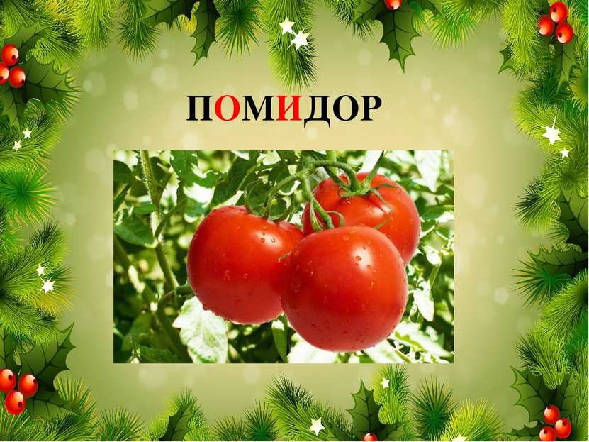 ПОМИДОР
