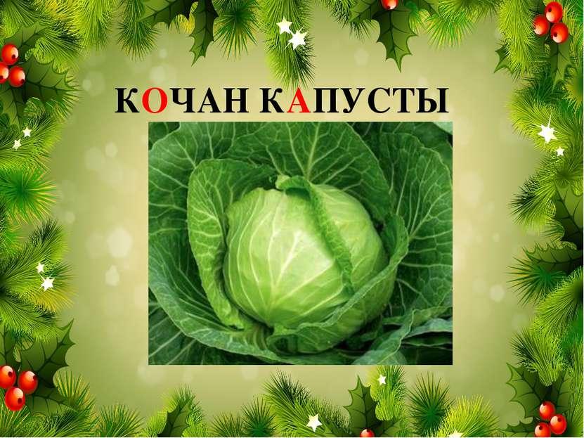 КОЧАН КАПУСТЫ
