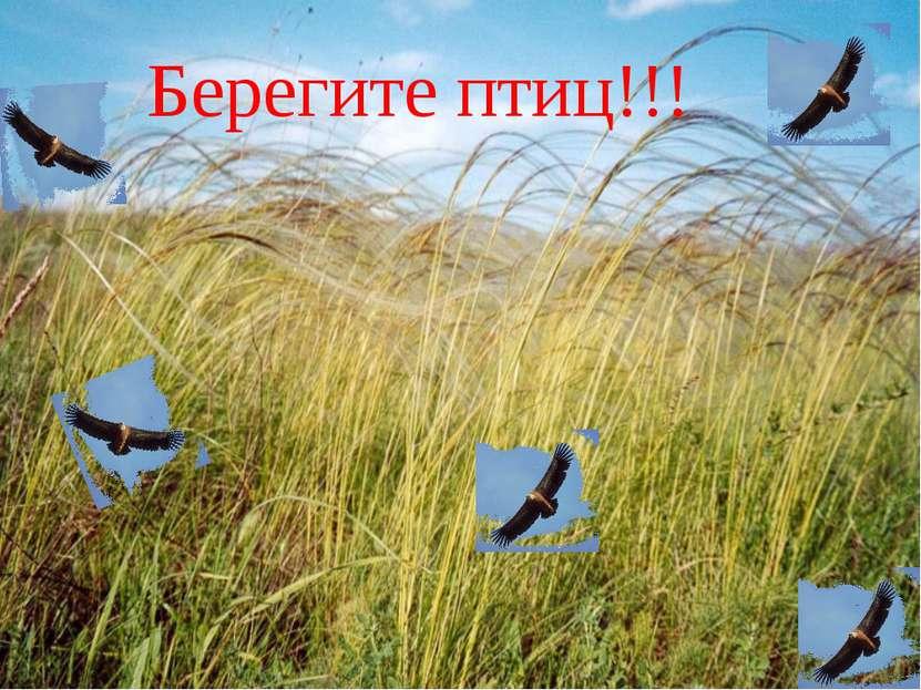 Берегите птиц!!!