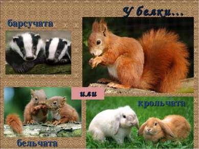 У белки… барсучата крольчата бельчата или