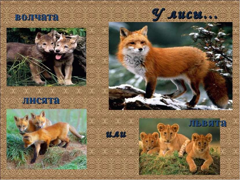 У лисы… волчата лисята или львята