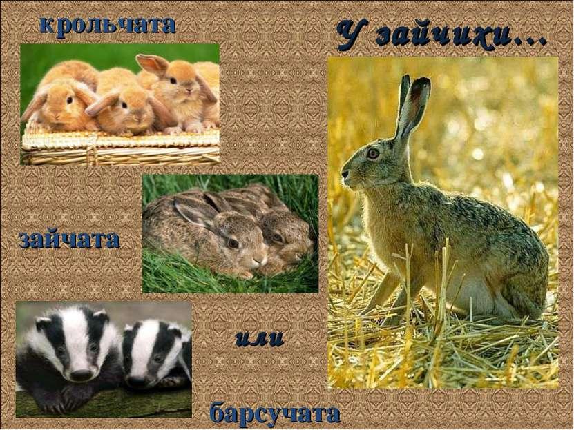 У зайчихи… крольчата зайчата или барсучата