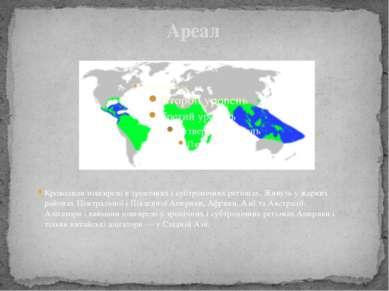 Ареал Крокодили поширені в тропічних і субтропічних регіонах. Живуть у жарких...
