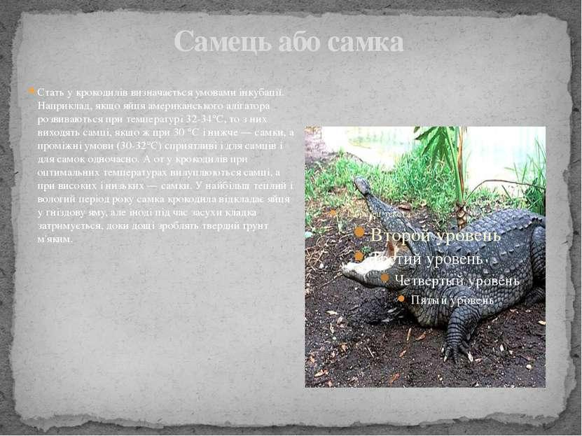 Самець або самка Стать у крокодилів визначається умовами інкубації. Наприклад...