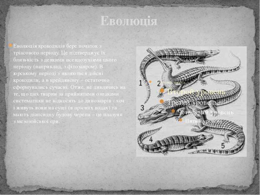 Еволюція Еволюція крокодилів бере початок з тріасового періоду. Це підтверджу...