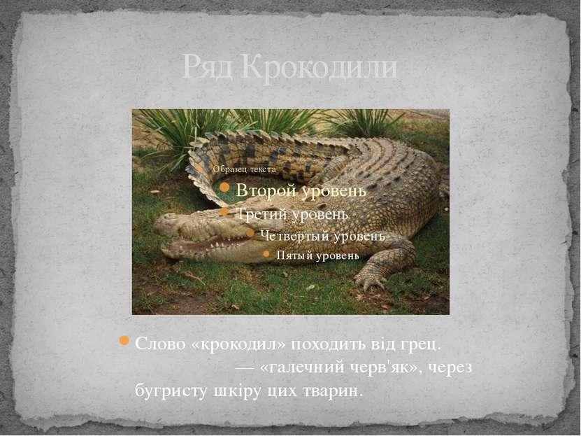 Ряд Крокодили Слово «крокодил» походить від грец. κροκόδειλος— «галечний чер...