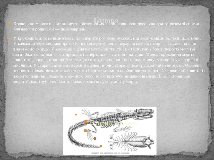 Будова Крокодили майже не змінилися з доісторичних часів, коли вони населяли ...
