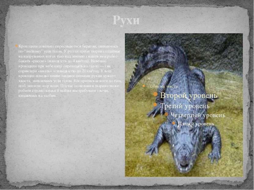 """Рухи Крокодили повільно пересуваються берегом, звиваючись по-""""зміїному"""" усім ..."""