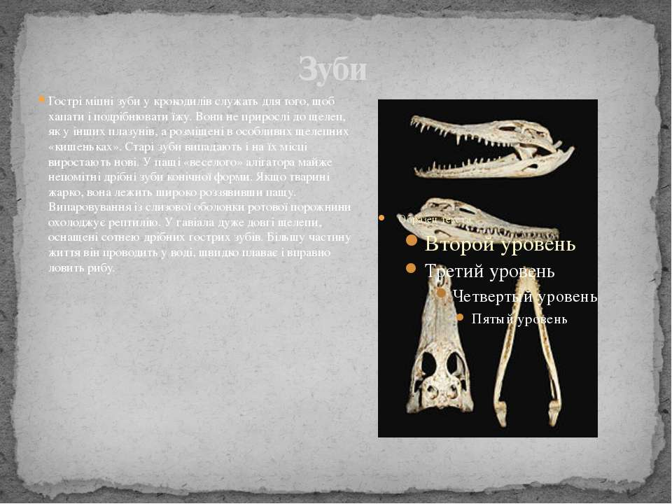 Зуби Гострі міцні зуби у крокодилів служать для того, щоб хапати і подрібнюва...