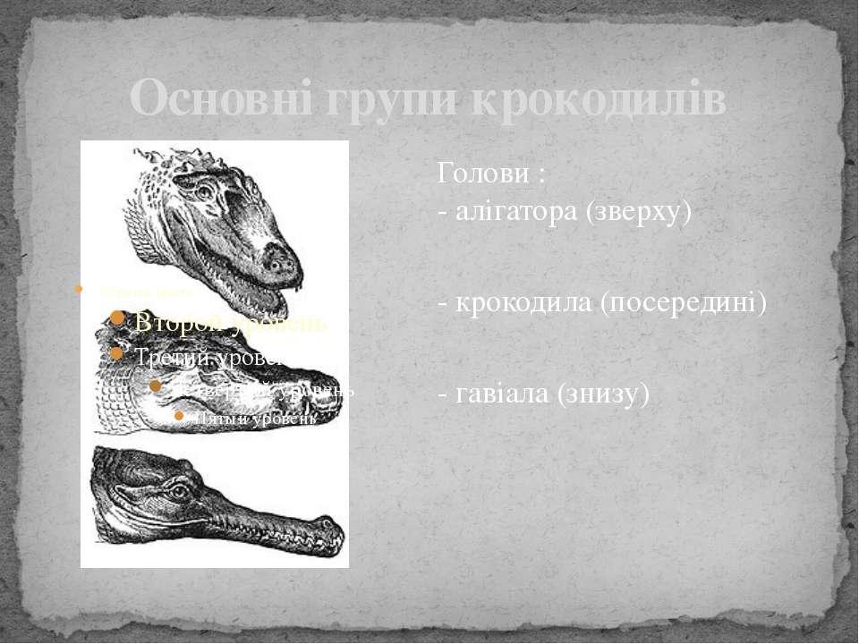 Основні групи крокодилів Голови : - алігатора (зверху) - крокодила (посередин...
