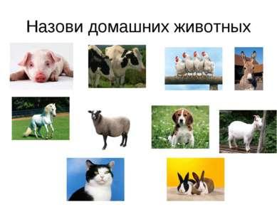 Назови домашних животных