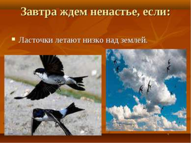 Завтра ждем ненастье, если: Ласточки летают низко над землей.
