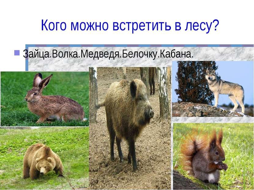Кого можно встретить в лесу? Зайца.Волка.Медведя.Белочку.Кабана.