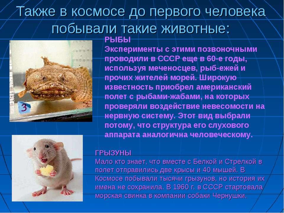 Также в космосе до первого человека побывали такие животные: РЫБЫ Эксперимент...