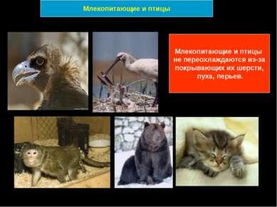 Млекопитающие и птицы не переохлаждаются из-за покрывающих их шерсти, пуха, п...