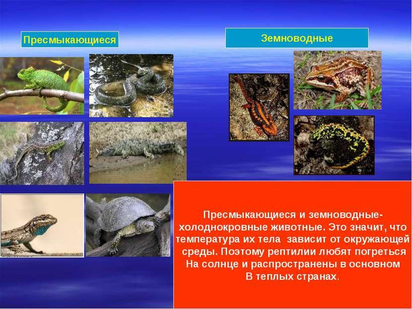 Пресмыкающиеся Земноводные Пресмыкающиеся и земноводные- холоднокровные живот...