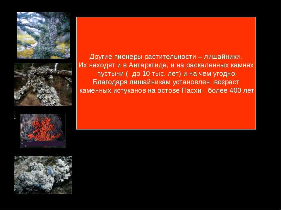 Другие пионеры растительности – лишайники. Их находят и в Антарктиде, и на ра...