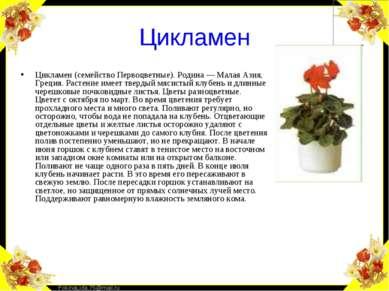 Цикламен Цикламен (семейство Первоцветные). Родина — Малая Азия, Греция. Раст...