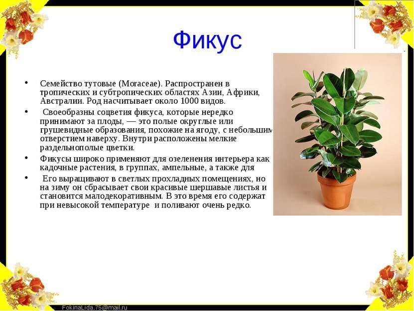 Фикус Семейство тутовые (Моrасеае). Распространен в тропических и субтропичес...