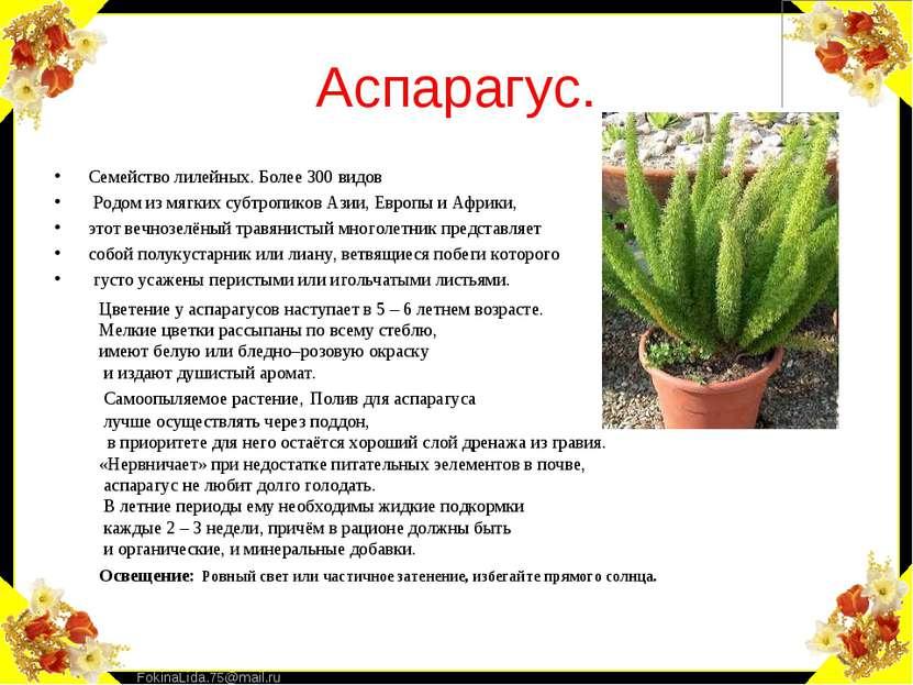 Аспарагус. Семейство лилейных. Более 300 видов Родом из мягких субтропиков Аз...