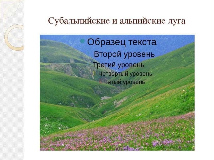 Субальпийские и альпийские луга