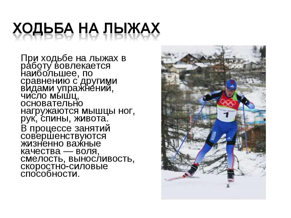 При ходьбе на лыжах в работу вовлекается наибольшее, по сравнению с другими в...