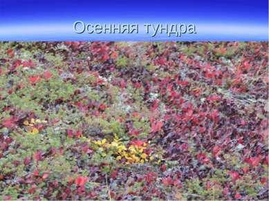 Осенняя тундра