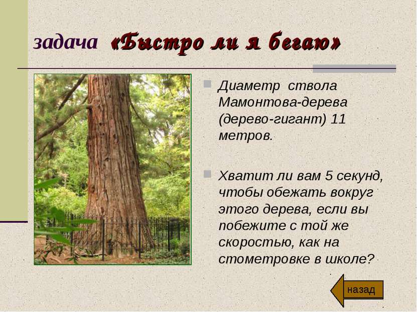 задача «Быстро ли я бегаю» Диаметр ствола Мамонтова-дерева (дерево-гигант) 11...