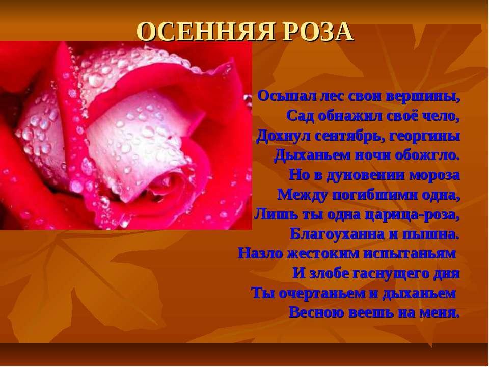 ОСЕННЯЯ РОЗА Осыпал лес свои вершины, Сад обнажил своё чело, Дохнул сентябрь,...
