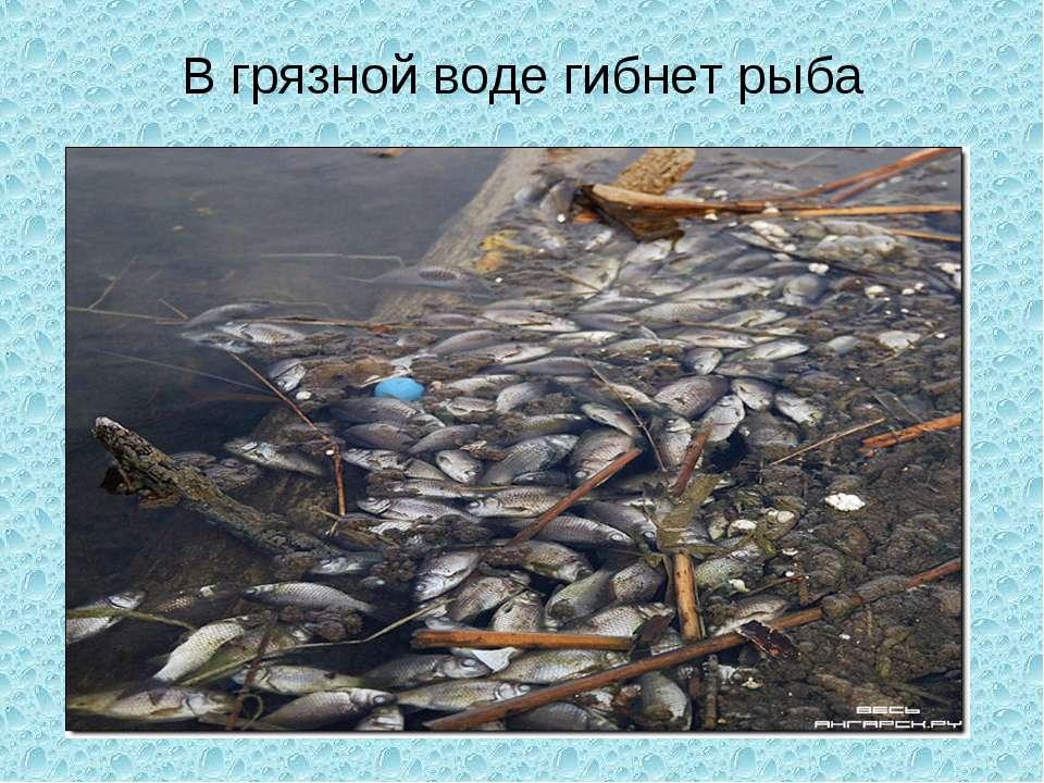 В грязной воде гибнет рыба
