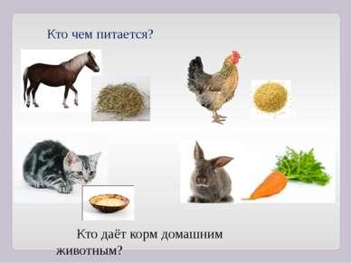 Кто чем питается? Кто даёт корм домашним животным?