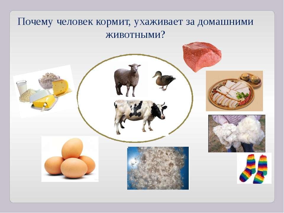 Почему человек кормит, ухаживает за домашними животными?
