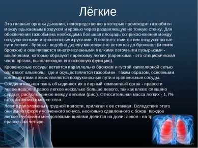 Лёгкие Это главные органы дыхания, непосредственно в которых происходит газоо...