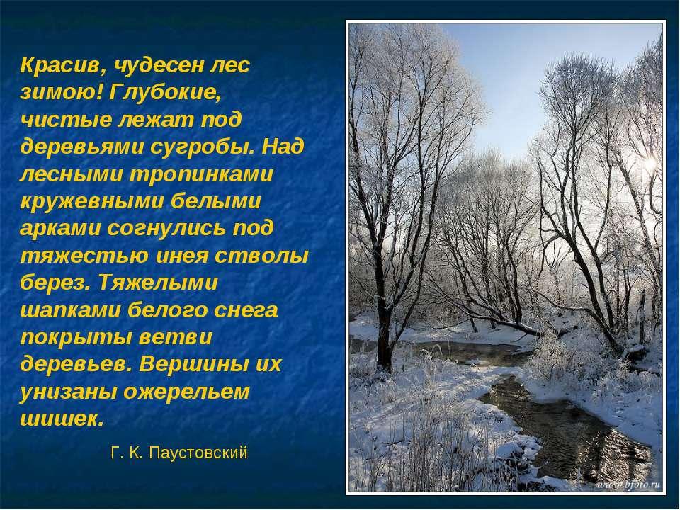 Красив русский лес зимой белым кружевом