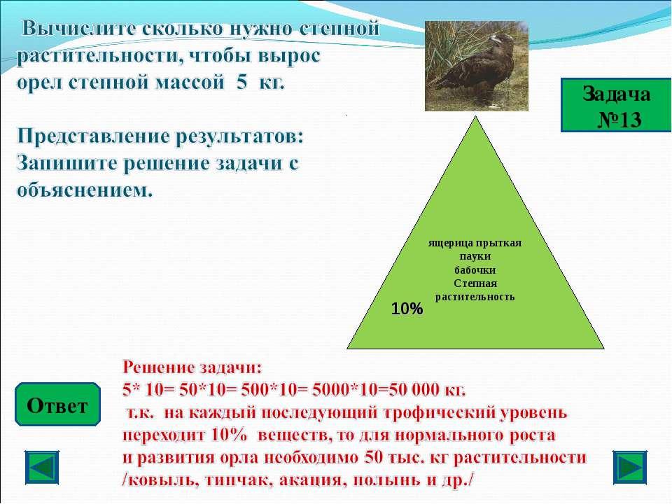 Задача №13 Ответ ящерица прыткая пауки бабочки Степная растительность 10%