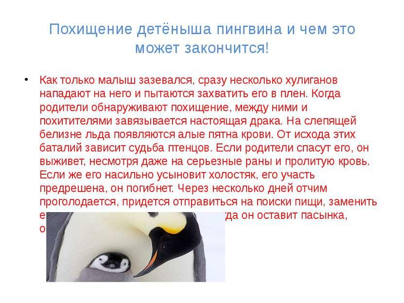 Похищение детёныша пингвина и чем это может закончится! Как только малыш зазе...