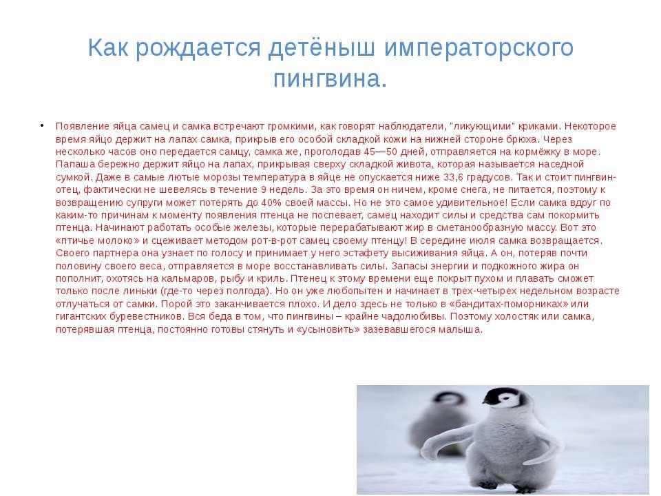 Как рождается детёныш императорского пингвина. Появление яйца самец и самка в...